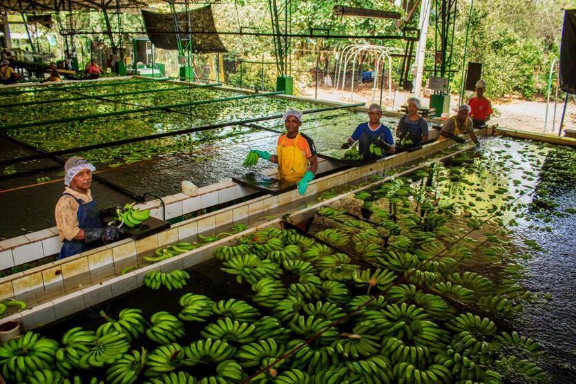 Planta procesadora de la fruta