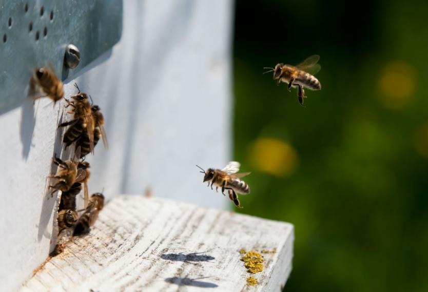 Pequeña afectación de producción de miel