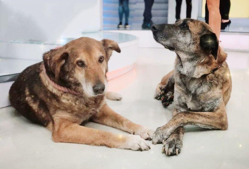 Mono y Pirula, dos de los perros para adoptar