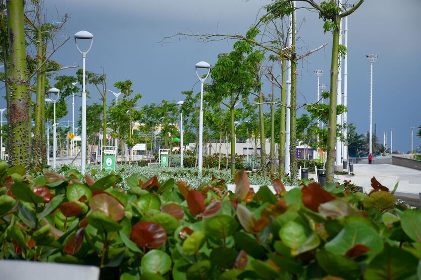Árboles Malecón de Barranquilla