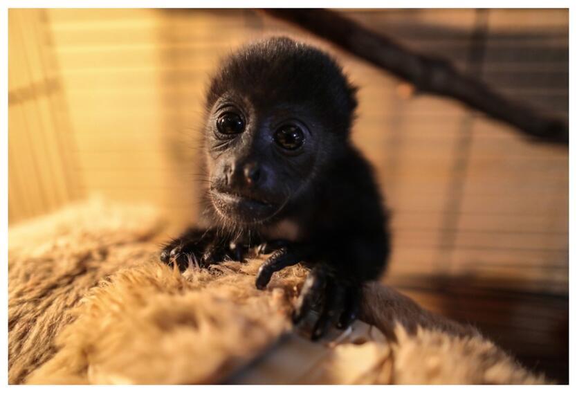 Imagen de referencia de primates