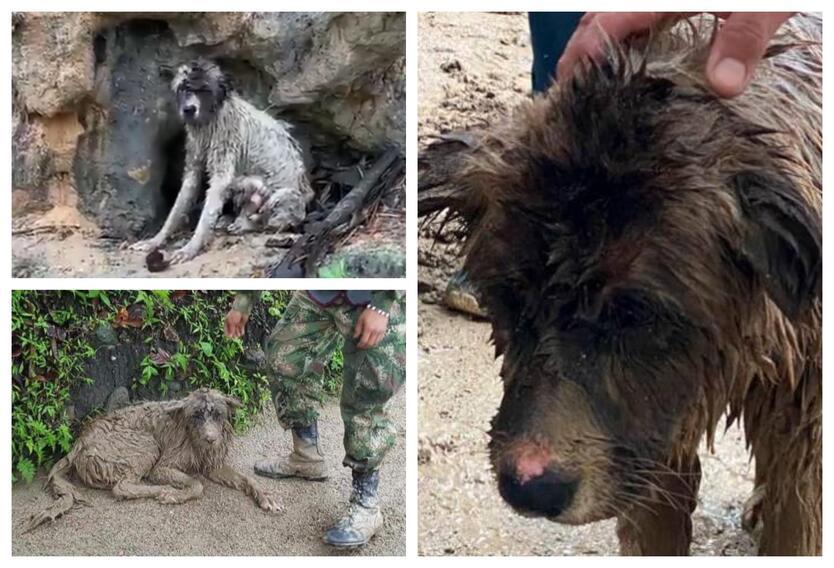 Animales afectados en avalancha de Piedecuesta