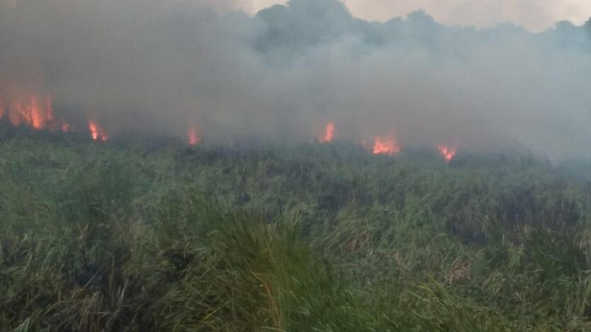 Autoridades trabajan para evitar más incendios forestales