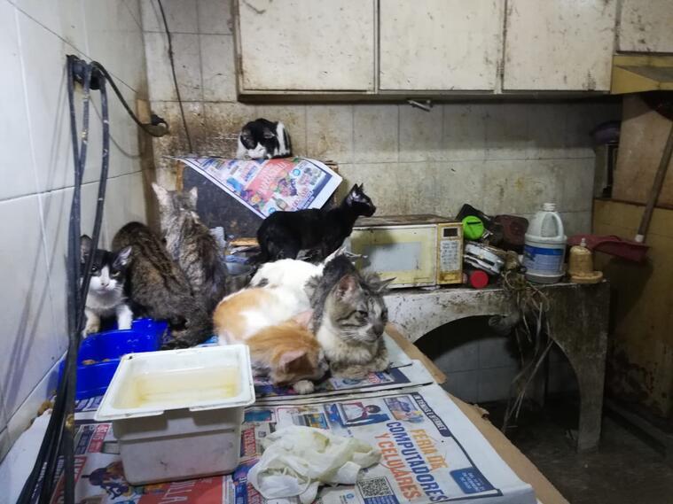 Los gatos estaban en mal estado de salud.