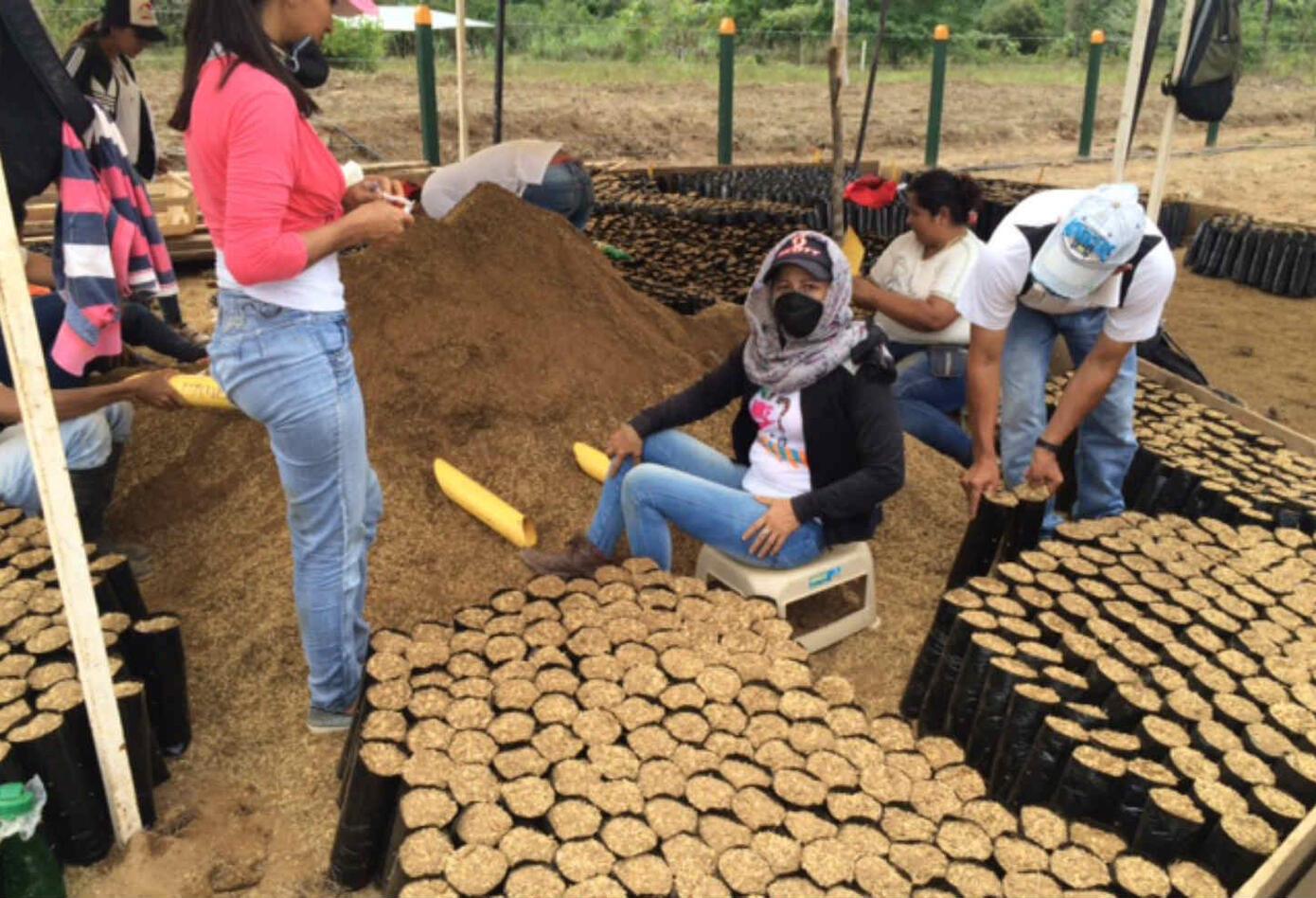 Sustitución de cultivos ilícitos en Guaviare