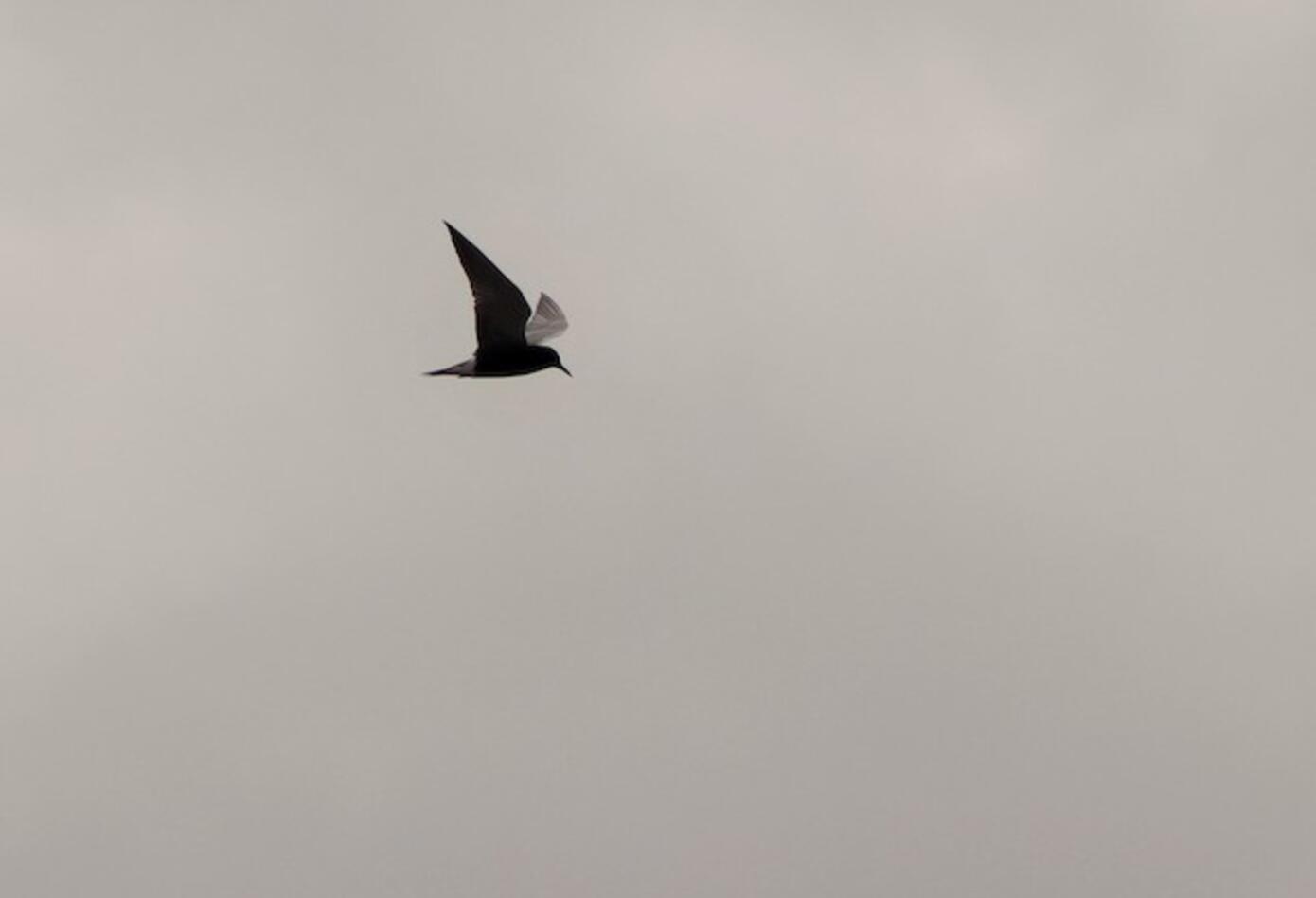 Avistamiento de aves.