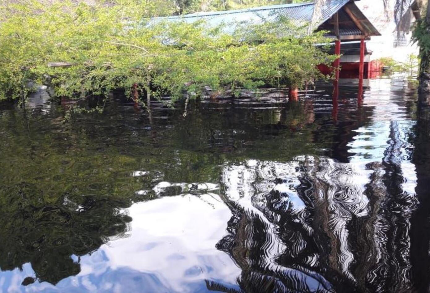 Cerca del 90% del sector agrícola afectado por inundaciones en Guainía