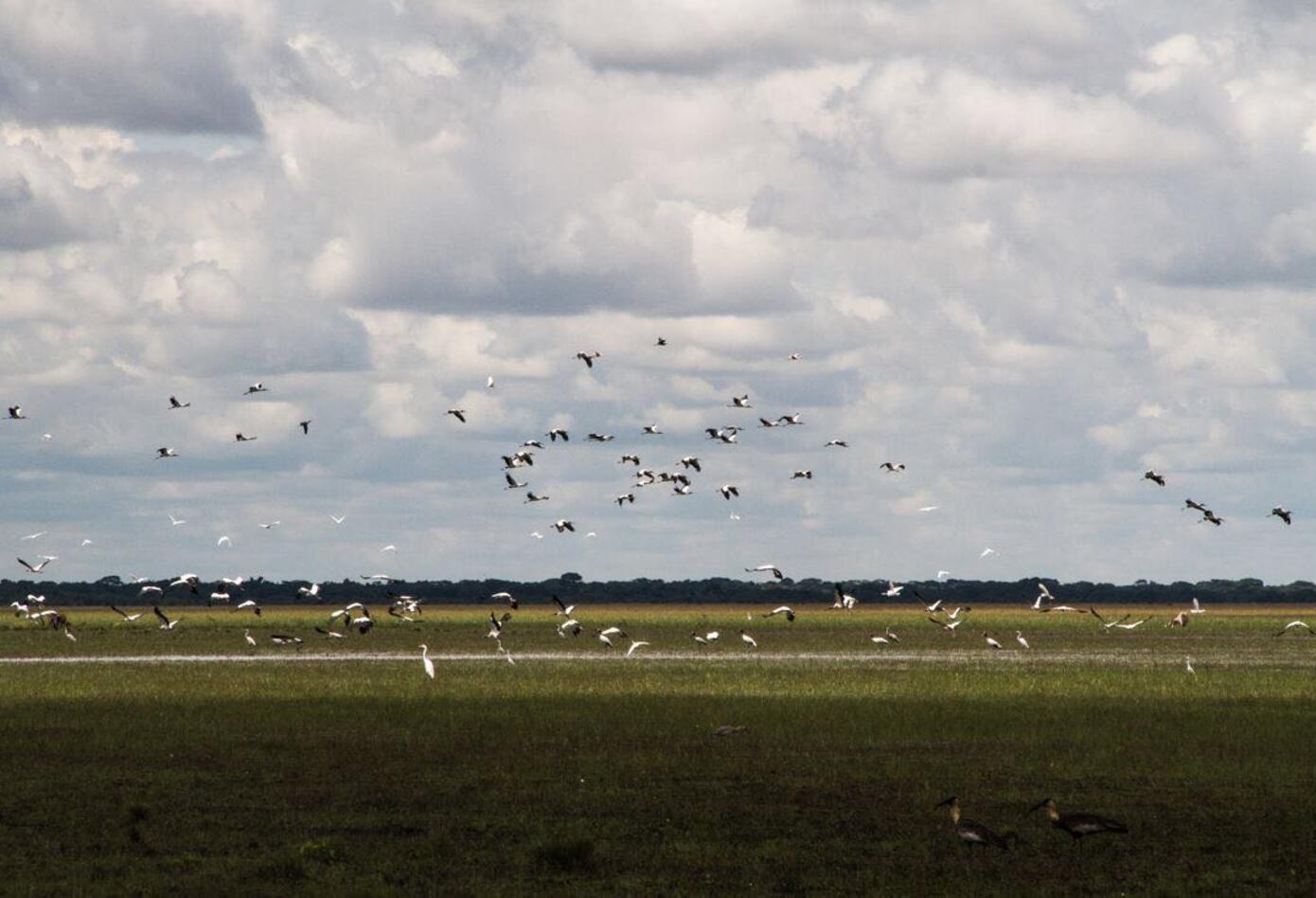 Aves en Cinaruco, Arauca.