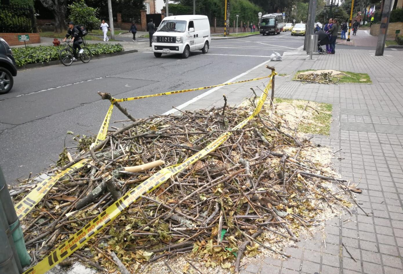 Ramas sobrantes de tala de árboles en Bogotá