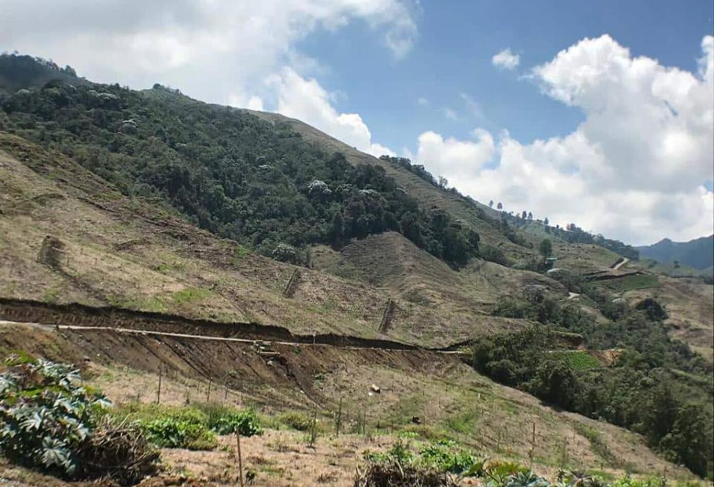 Afectaciones ambientales - cultivos de aguacate hass Quindío