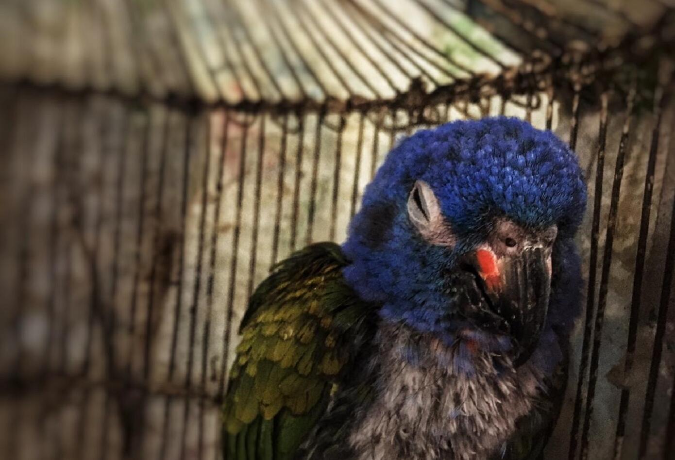 Estas aves fueron recuperadas en el occidente de Bogotá
