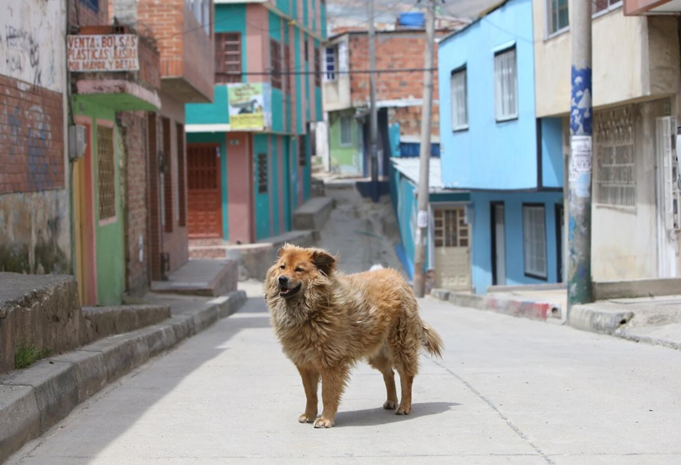 Perros callejeros en Ciudad Bolívar