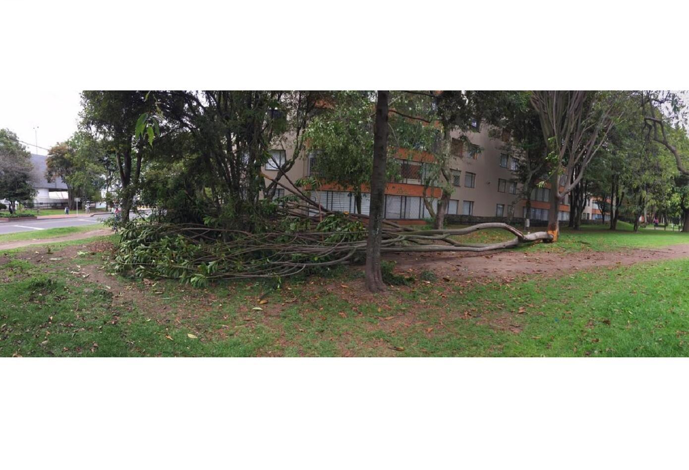 Según el Jardín Botánico están circulando fotos de arboles caídos, diciendo que se han talado por parte de la administración.