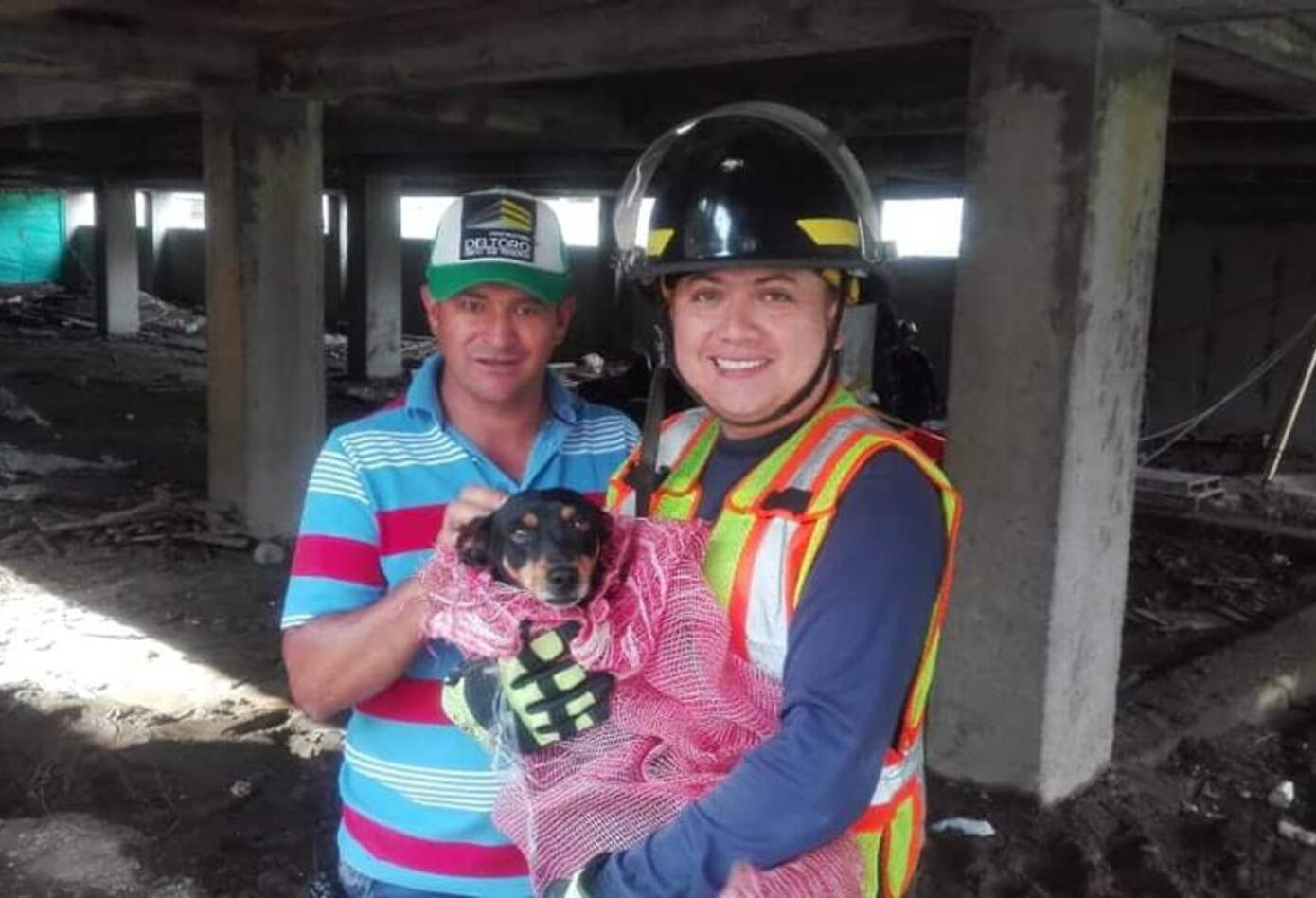 Rescatan perro en Armenia
