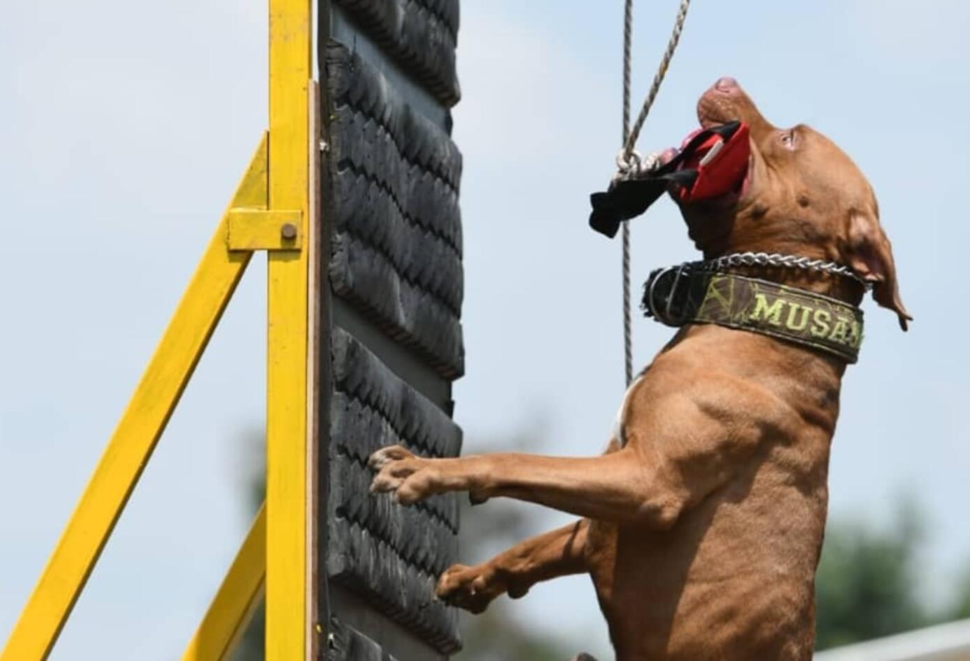 La feria de Cali tuvo por primera vez un Festival de Mascotas