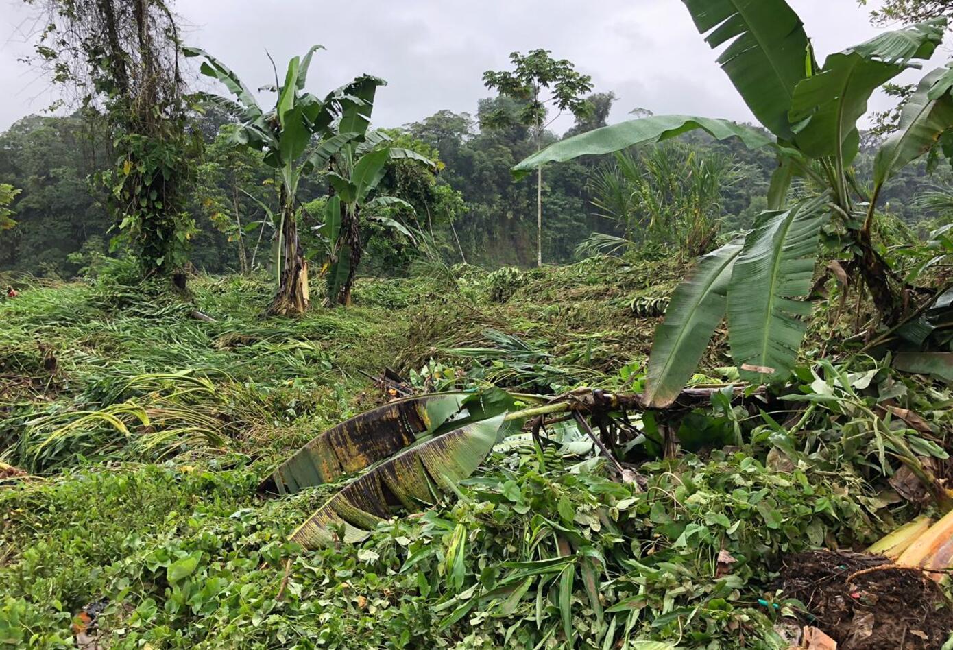 Efectos del desbordamiento del Rio Iscuandé.