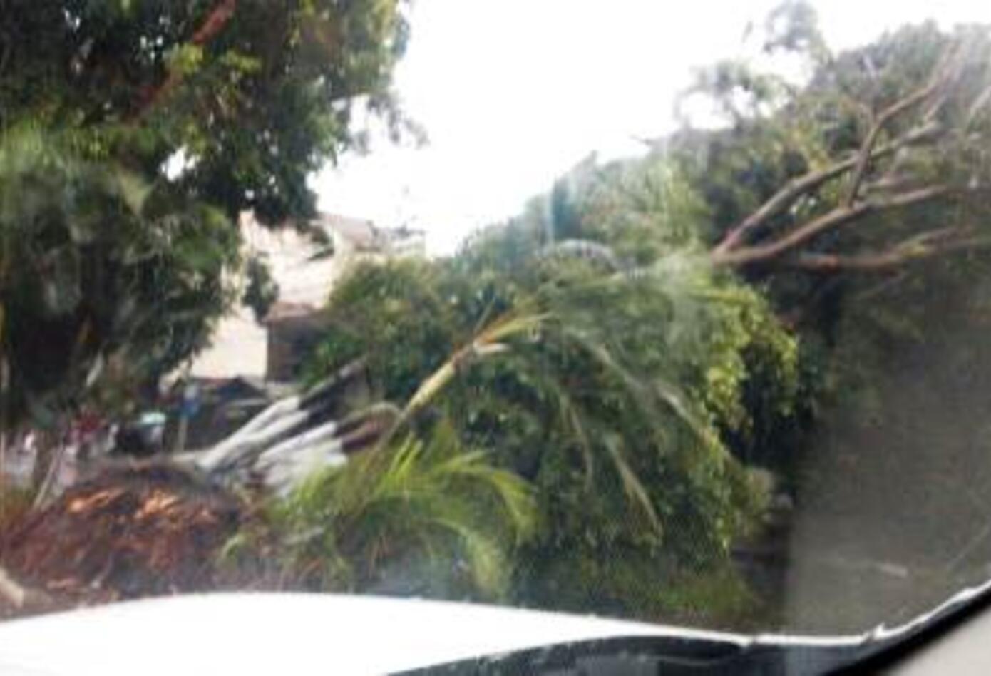 Múltiples emergencias en la capital vallecaucana por fuerte temporal