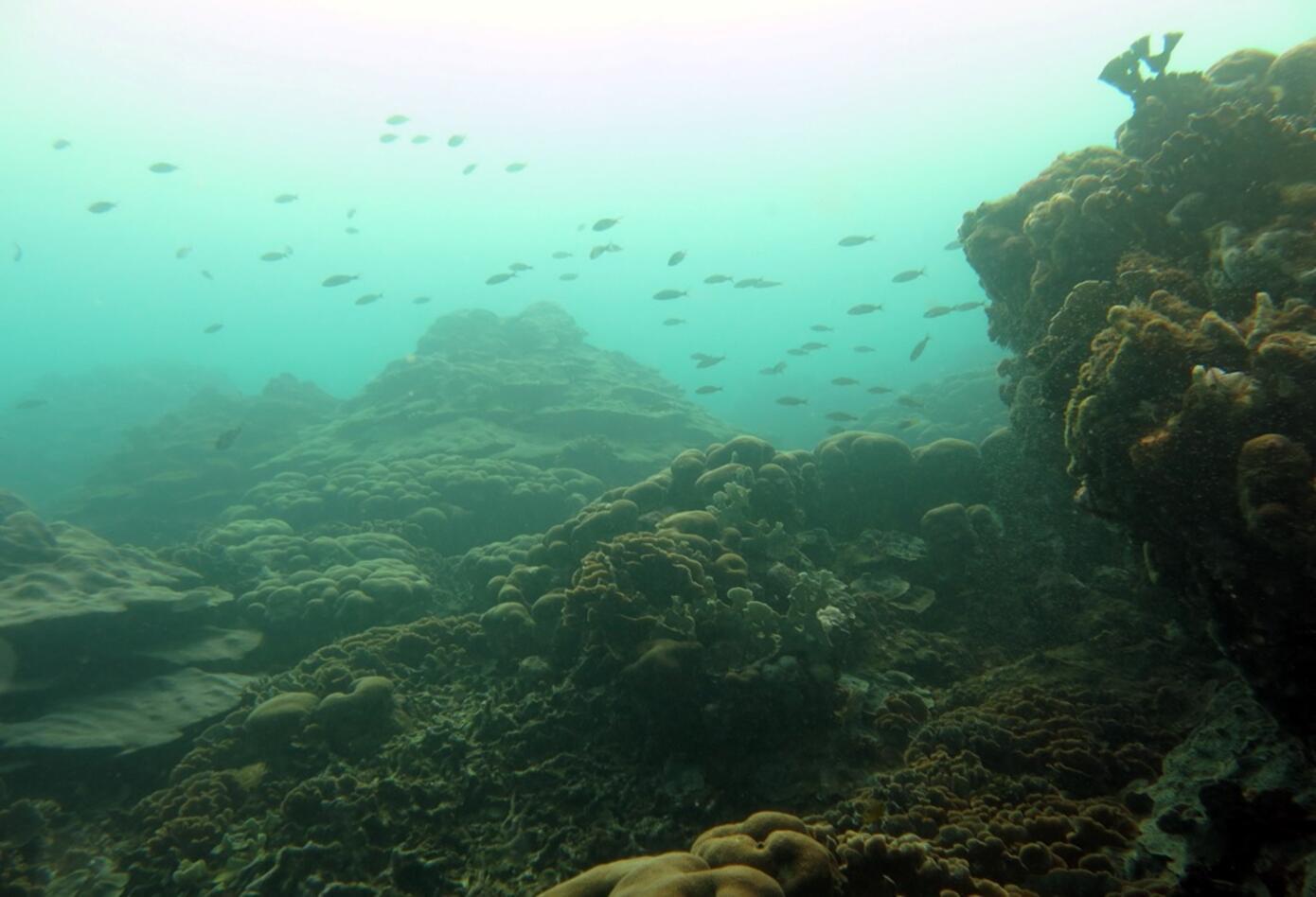 Arrecife de coral en el caribe colombiano