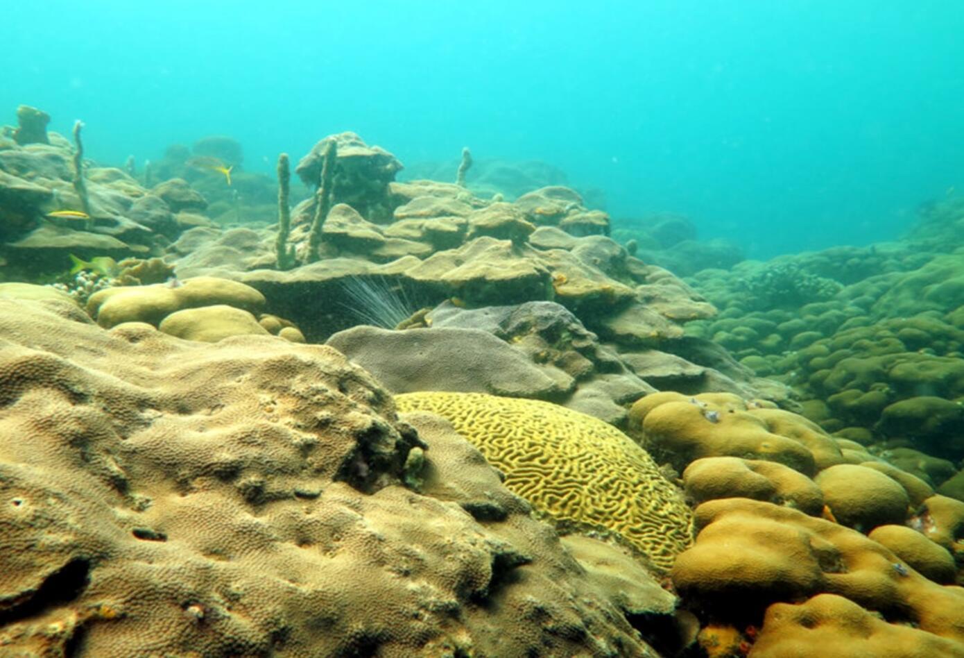 Población de coral en el caribe colombiano