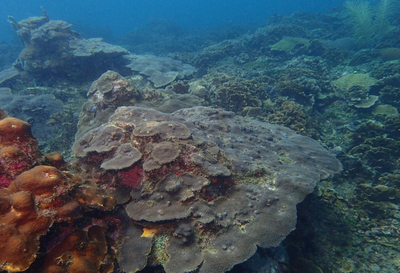Arrecife coralino en Cartagena