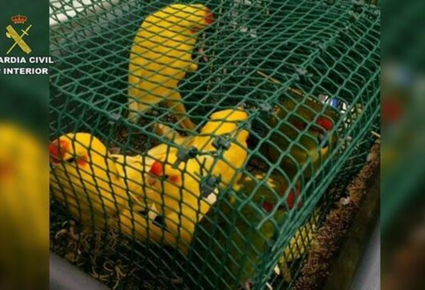 Aves que contrabamdeaba un colombiano a España