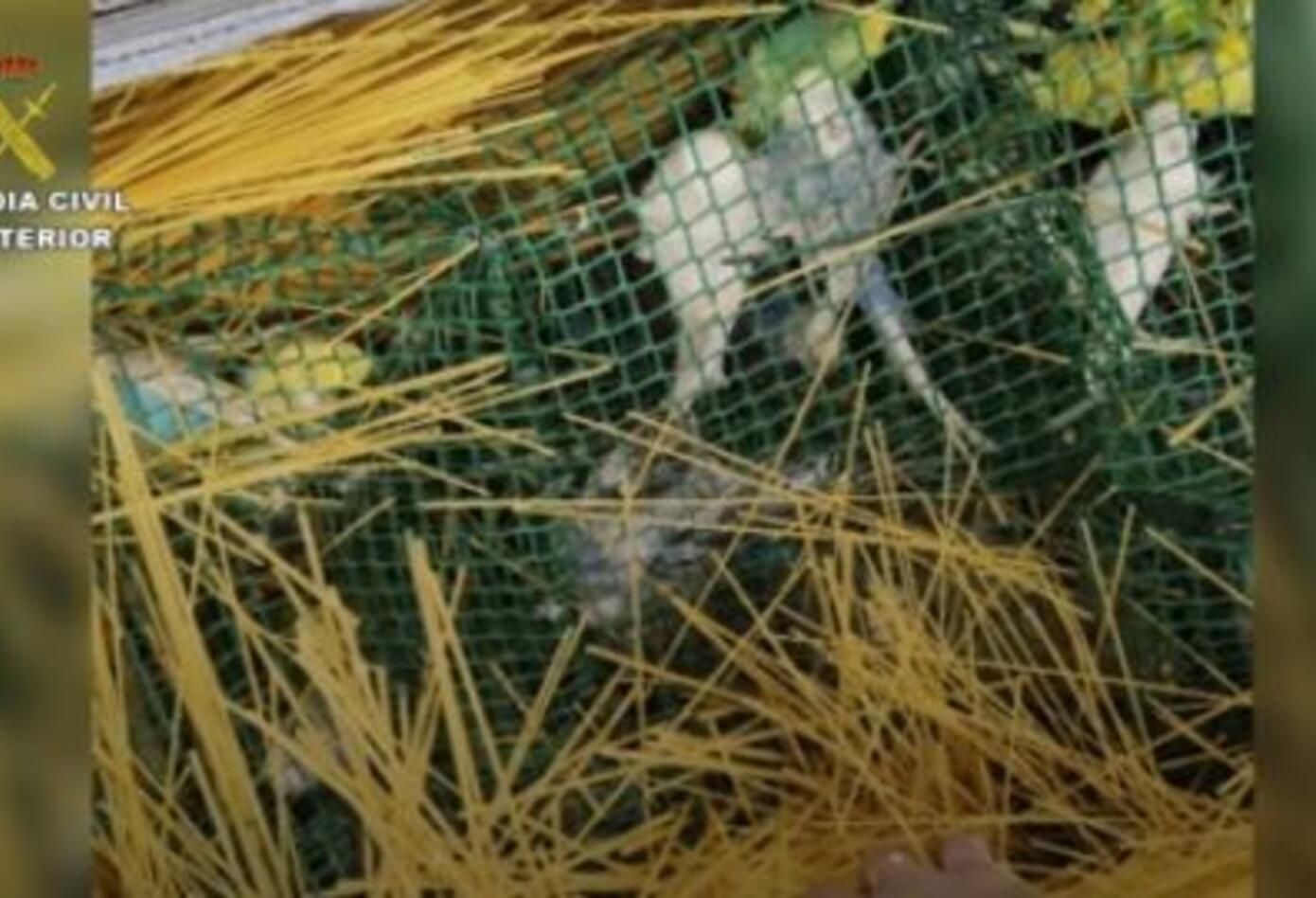 Aves que contrabandeaba un colombiano a España