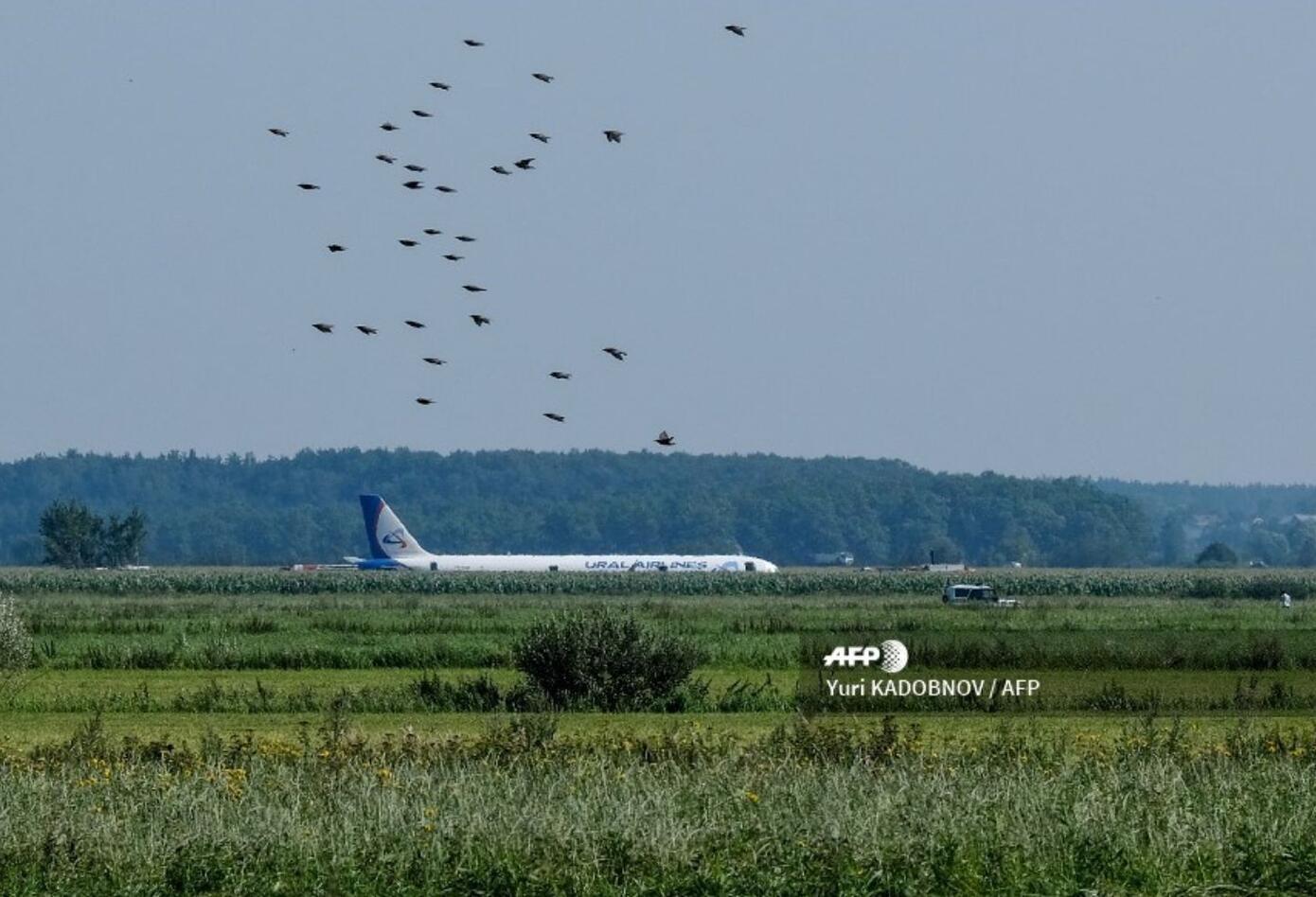 """Rusia aplaudió a los """"heroicos"""" pilotos del Airbus A321, con 226 pasajeros y 7 tripulantes a bordo, que este jueves efectuaron un aterrizaje forzoso en un campo de maíz en la región de Moscú"""