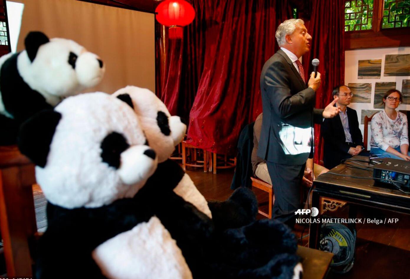 Con este doble nacimiento, Pairi Daiza ya cuenta con cinco ejemplares de panda gigante.