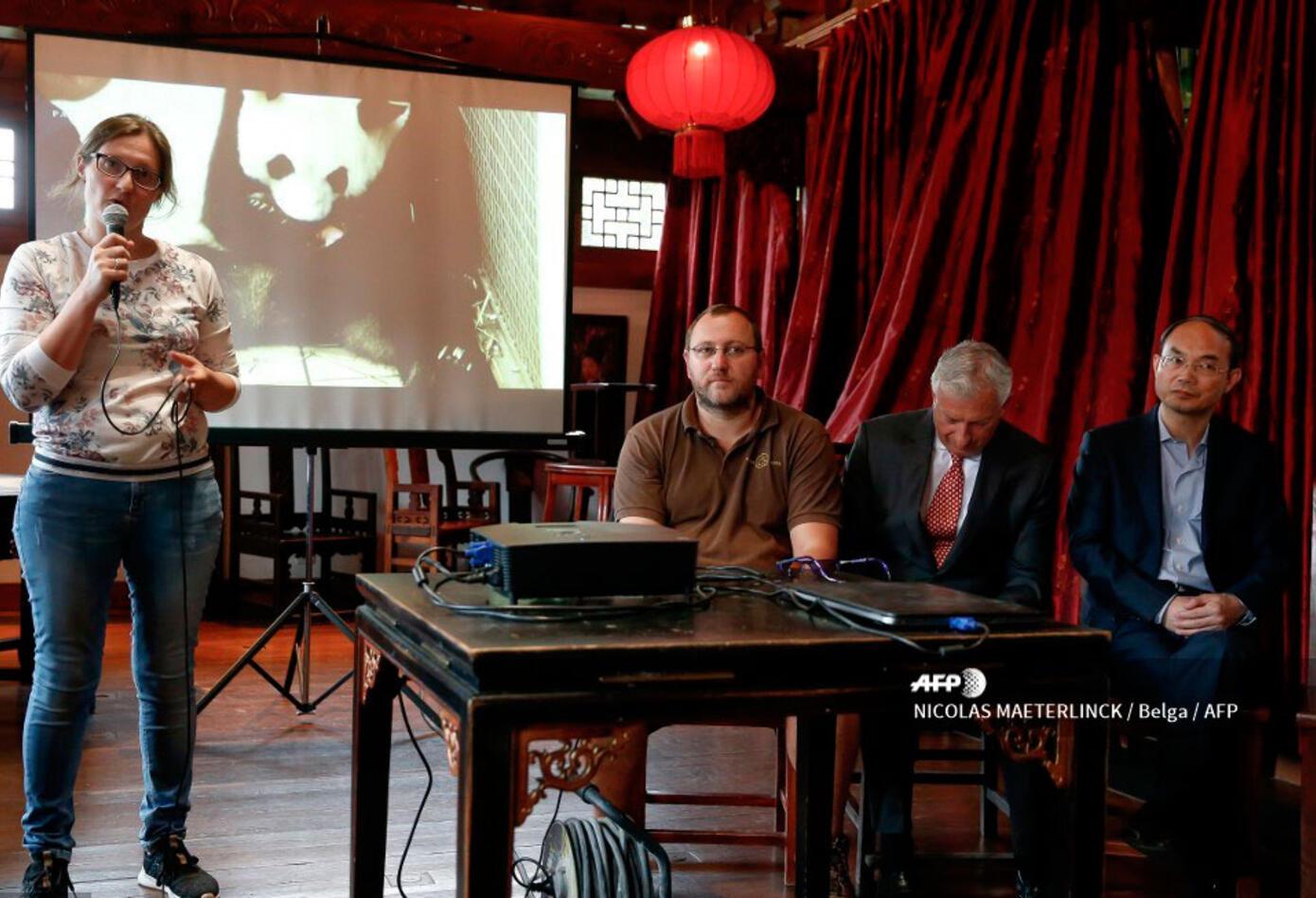 Los responsables del parque belga expresaron su satisfacción por la fecha del nacimiento, el 8 de agosto (8/8), un número que simboliza la buena suerte en la cultura china.