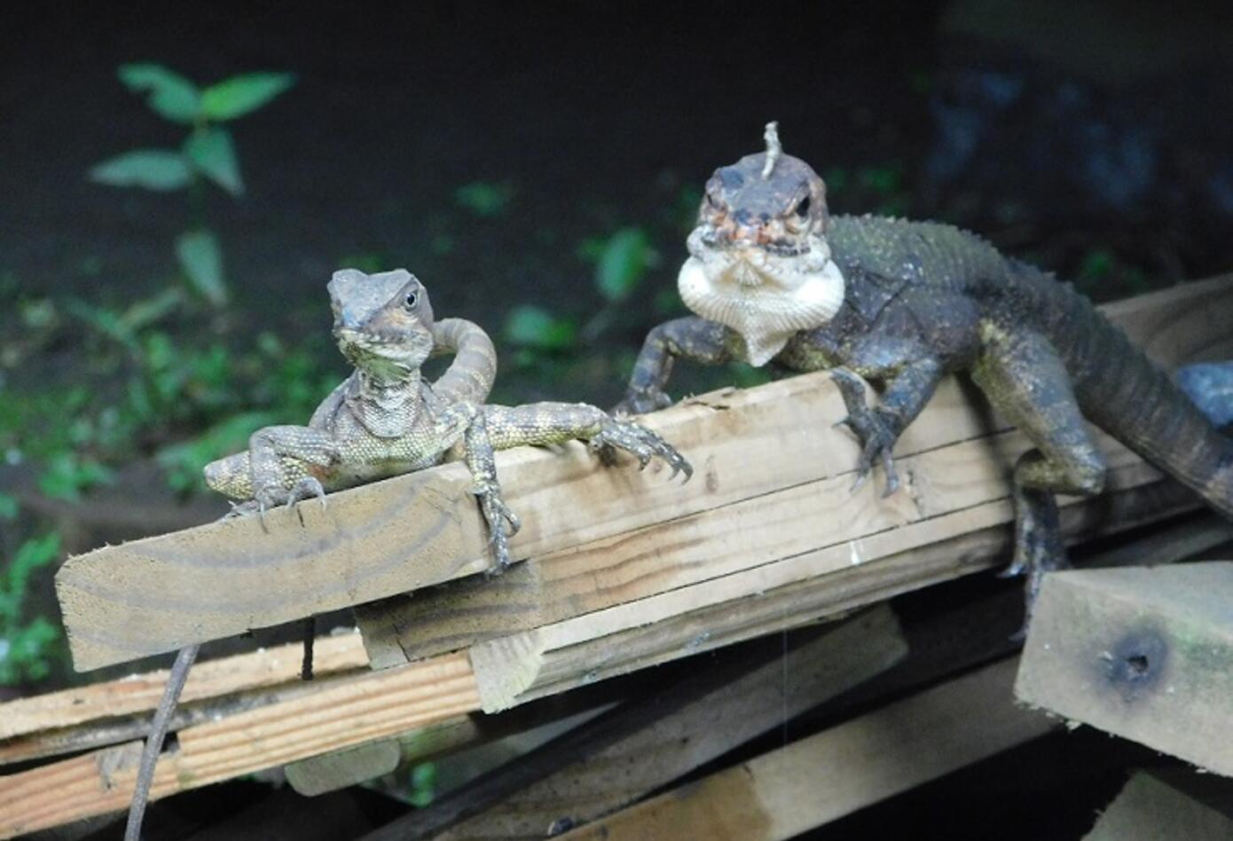Animales silvestres en Chocó.