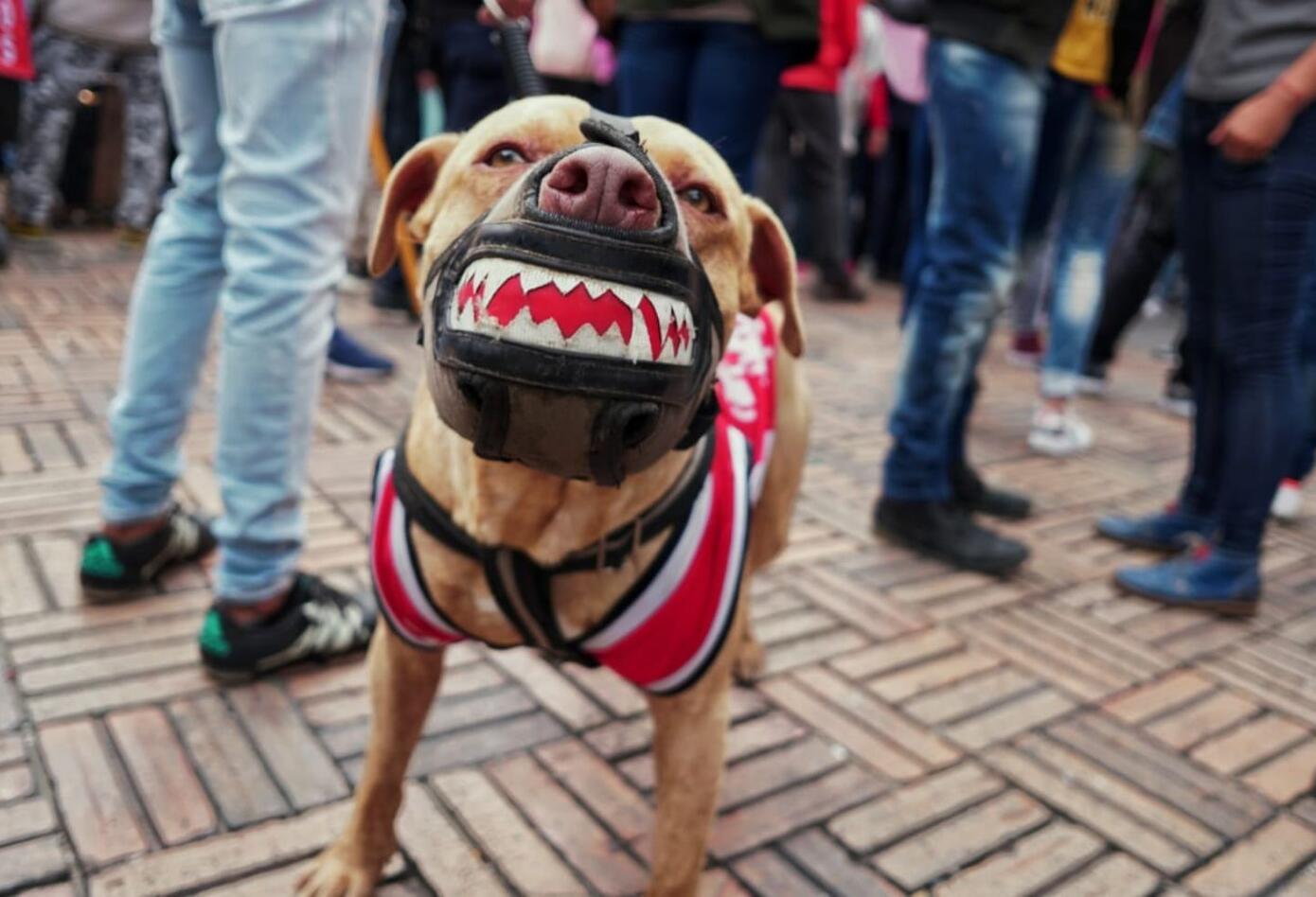 Algunos han decidido a ir a la Plaza de Bolívar con sus mascotas.