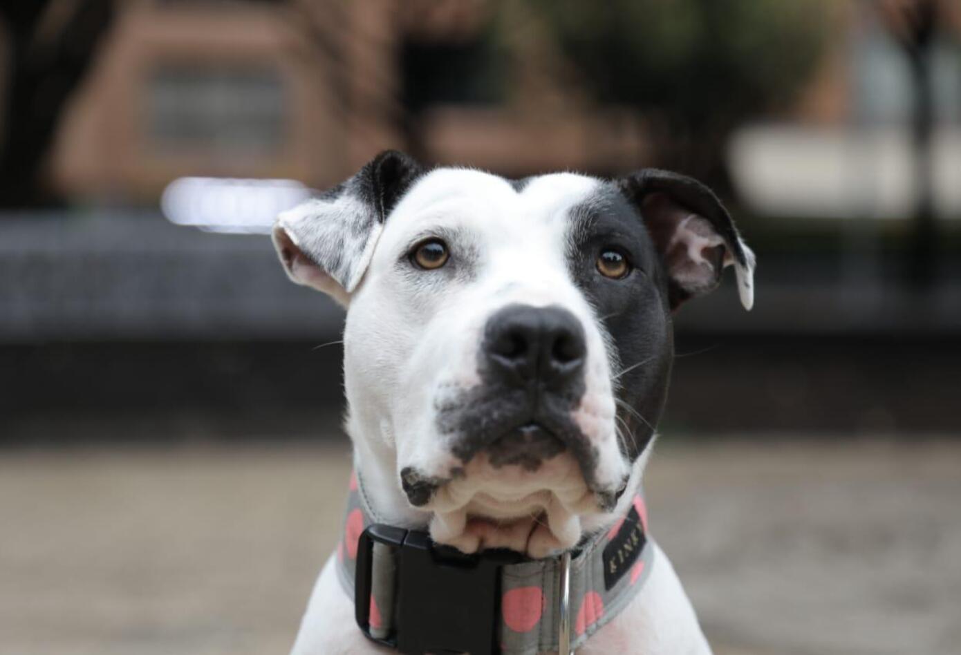 'Hérore de corazón', la campaña para rescatar las mascotas callejeras.