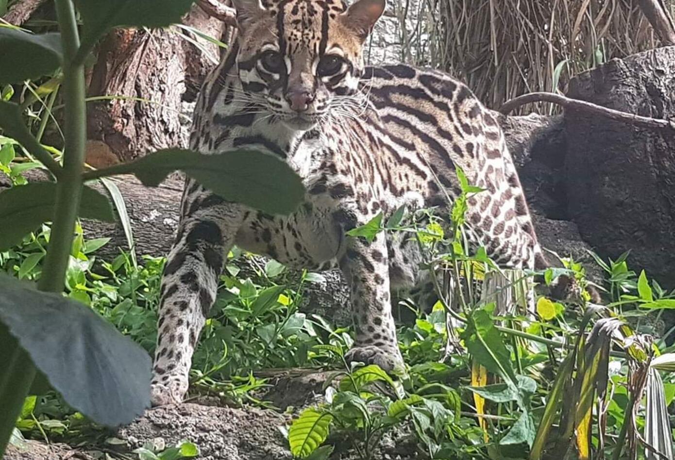 Animal silvestre en Bioparque.