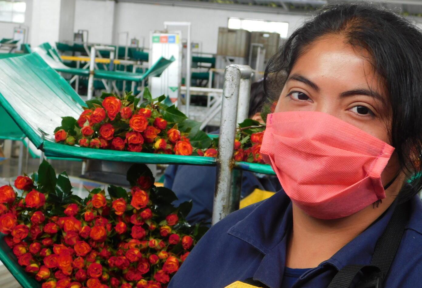 Floricultora en Madrid, Cundinamarca.