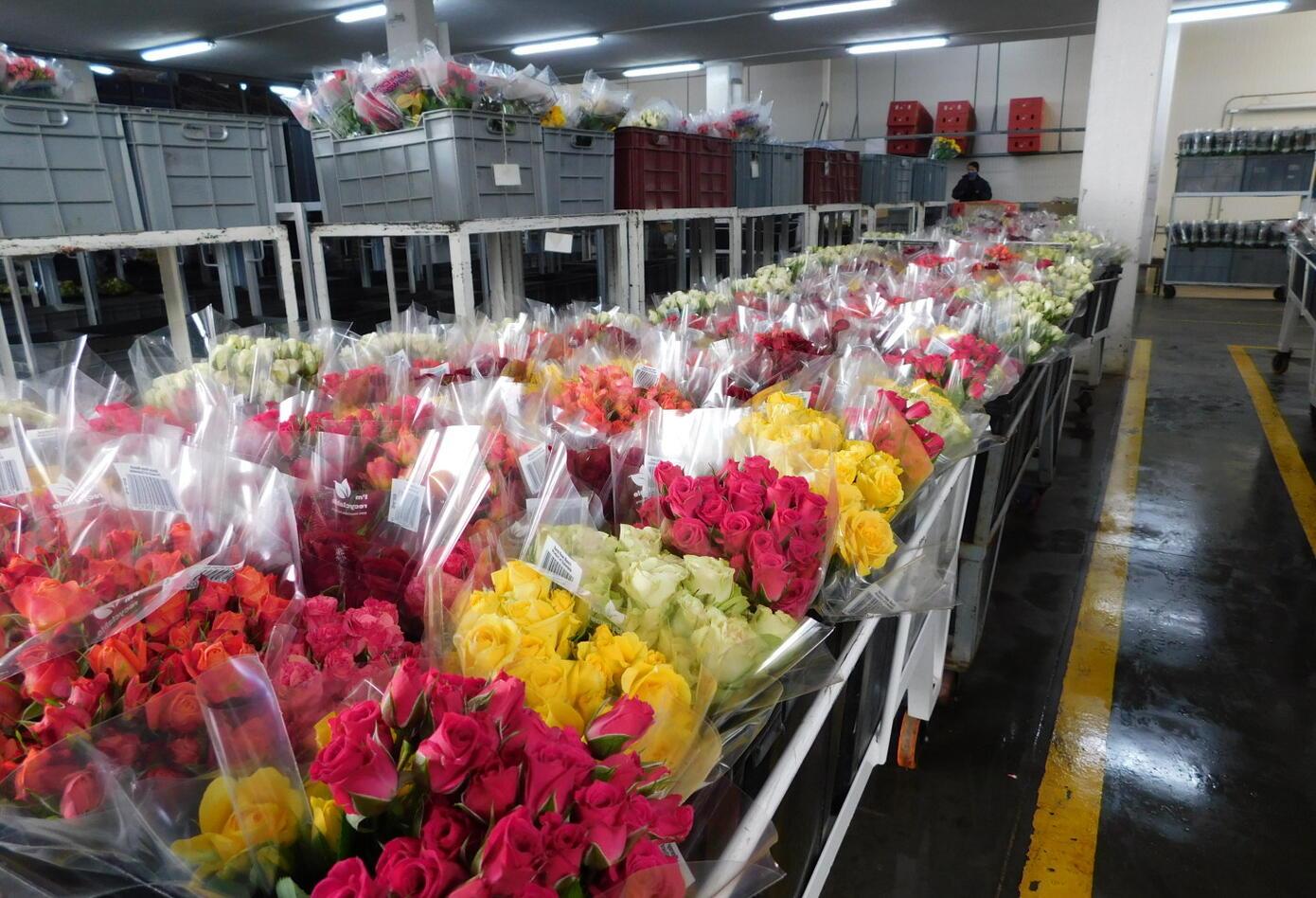 Flores colombianas exportadas a Estados Unidos.