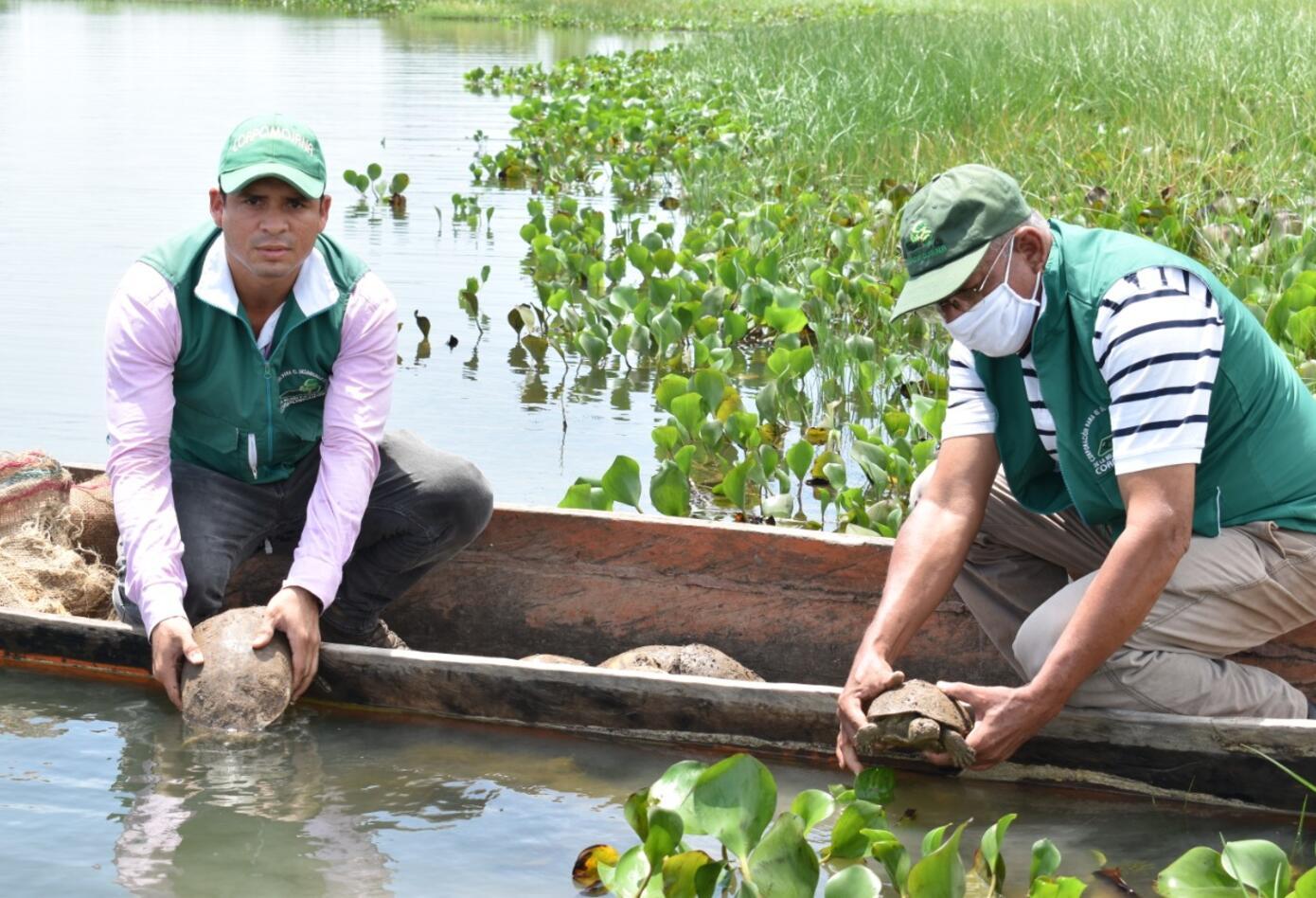 Liberación de tortugas hicoteas en La Mojana.