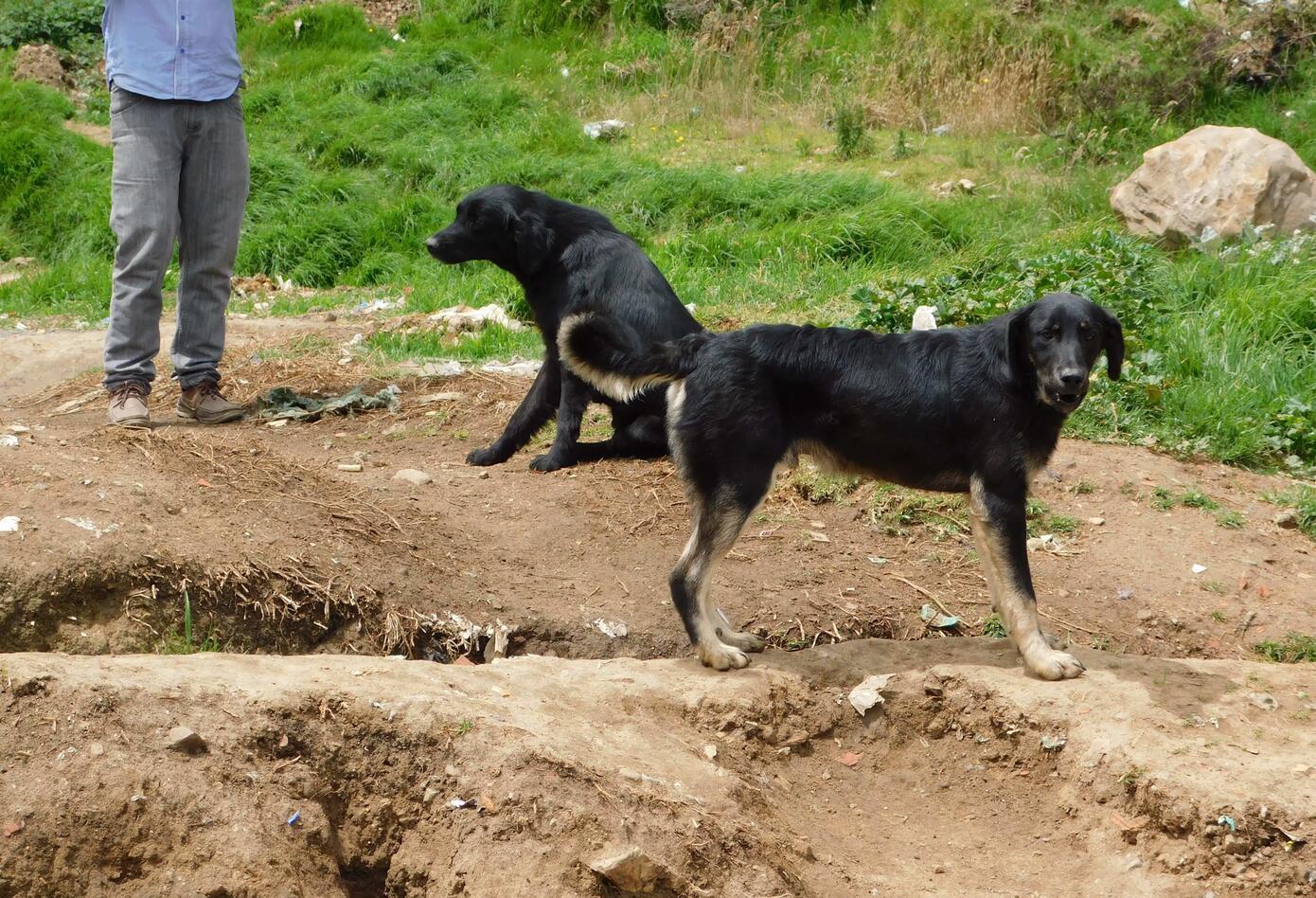Perros abandonados en Ciudad Bolívar/Bogotá.