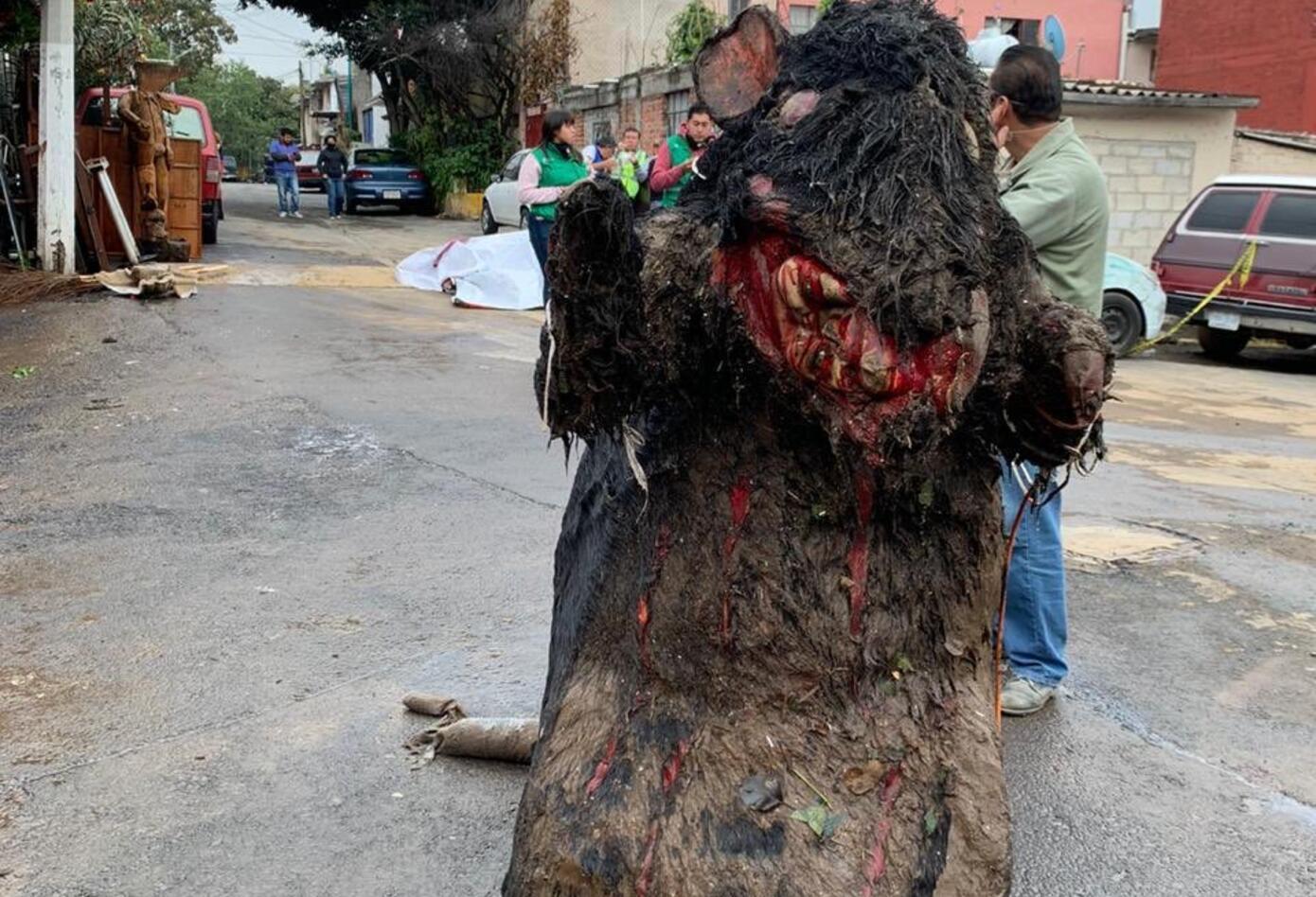 Rata gigante en México 2