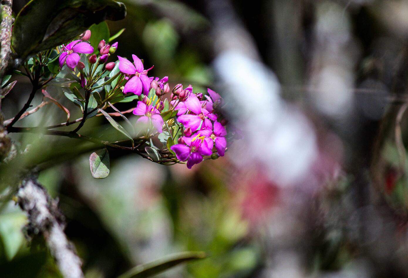 Variedad de flora en Chingaza, Cundinamarca.