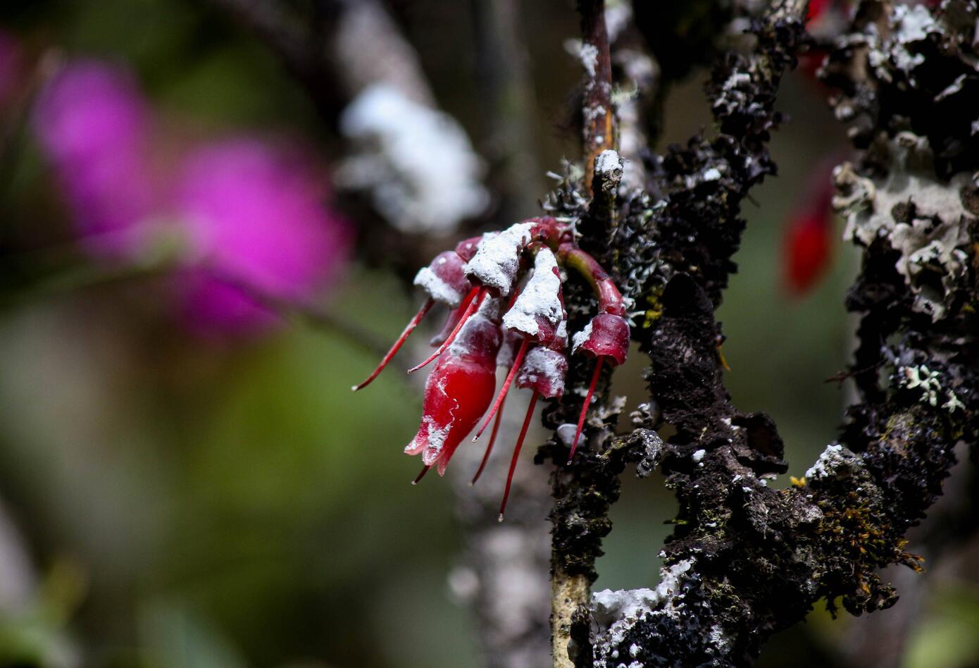 Vegetación en Chingaza, Cundinamarca.