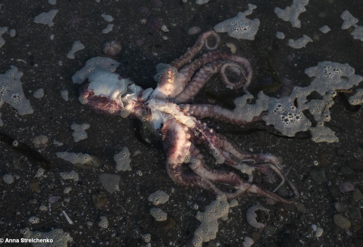 Vida marina muerta