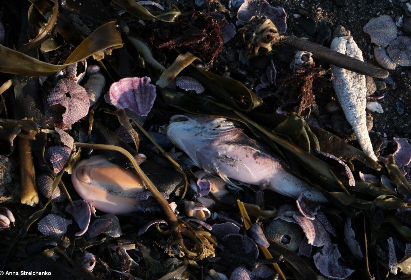 Vida marina muerta III