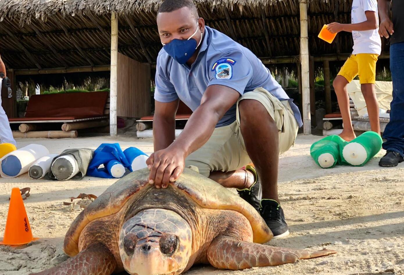 Liberación de tortugas marinas.