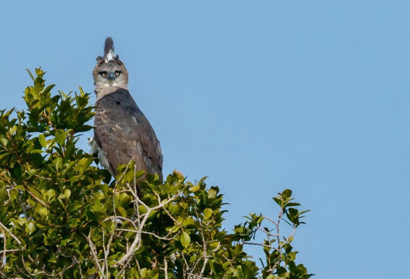 Más de 120 especies de aves fueron avistadas en los ecosistemas acuáticos y terrestres de la cuenca.