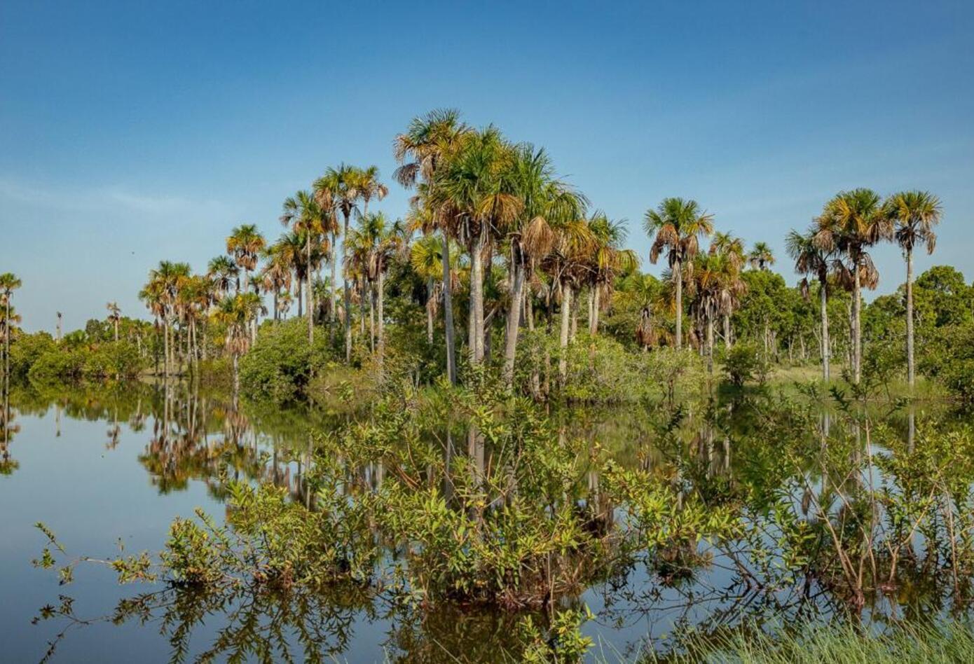 La cuenca del río Tillavá abarca cerca de 3.000 kilómetros cuadrados del municipio de Puerto Gaitán (Meta).