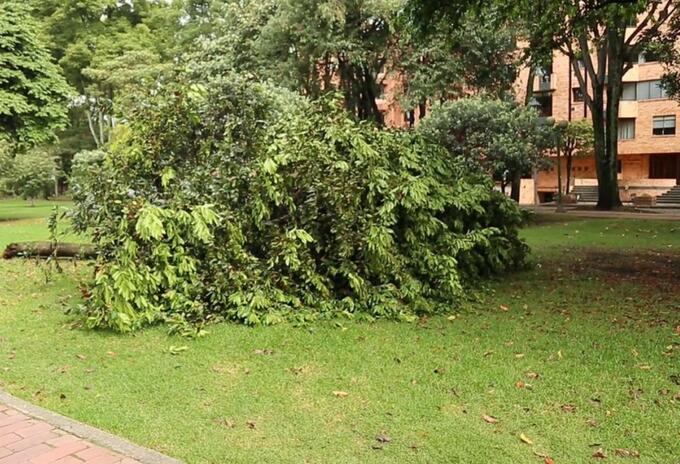 Árboles en el parque El Virrey