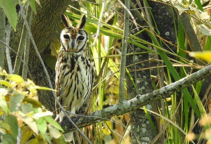 Colombia líder mundial en avistamiento de aves