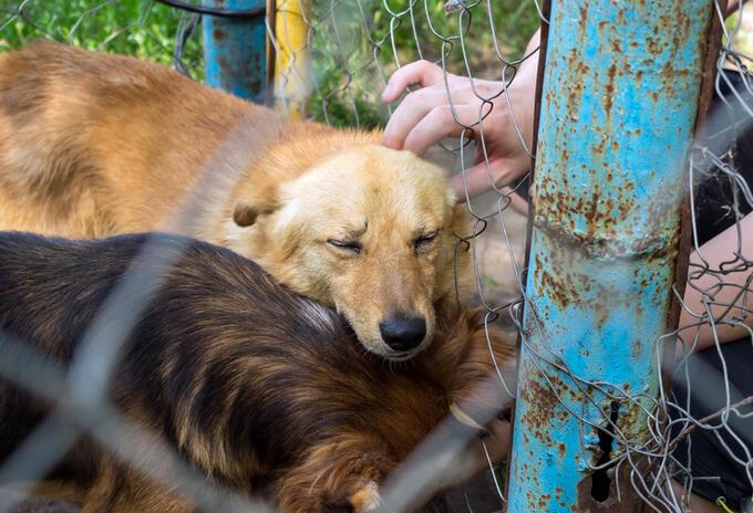 Perros - Adopción