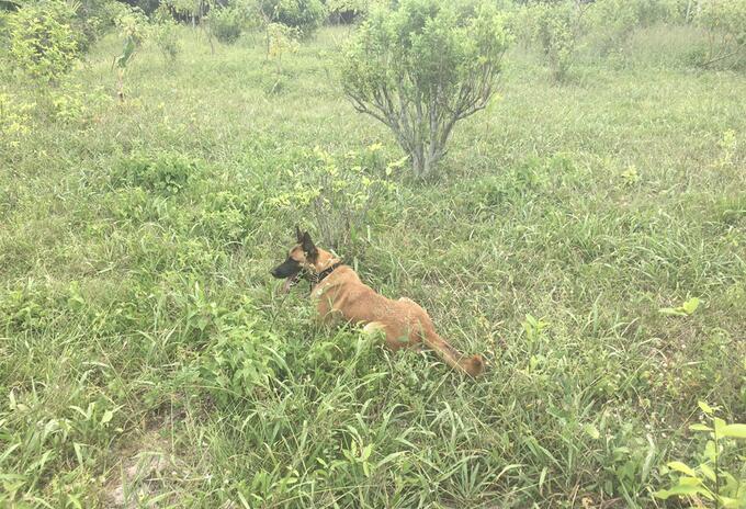 Perro antiexplosivo