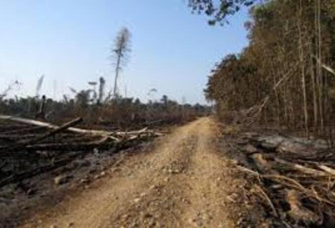El Caquetá presenta los más altos índices de deforestación en Colombia